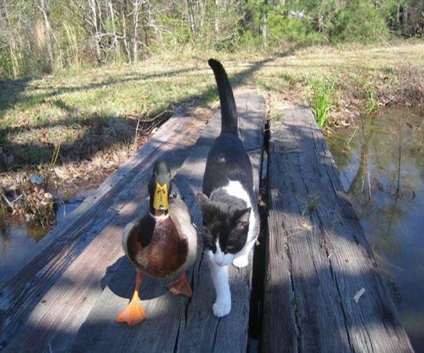 amistad-entre-animales-13
