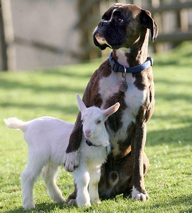 amistad-entre-animales-4